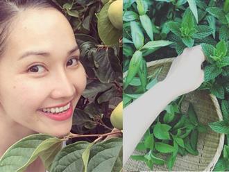 Gia đình Kim Hiền trồng rau lang, thanh long ở Mỹ