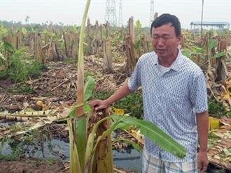 Vườn chuối tiền tỷ bị phá nát, nhóm người chặt được thả về