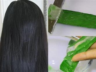 Chị em nào rụng tóc kinh niên như em thì cứ lấy gel nha đam bôi theo cách này đảm bảo tóc mọc như nấm sau mưa