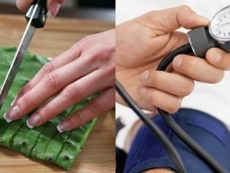 Ngừa ung thư, giảm đường huyết... chỉ với một nhánh xương rồng