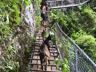 Xây cầu cho dê leo núi để làm giàu