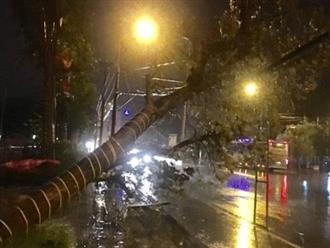 Cập nhật bão số 2: Bão đổ bộ vào Nghệ An-Hà Tĩnh trong đêm, gió giật cấp 11