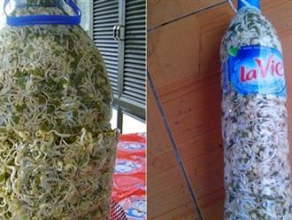 Cách làm giá đỗ bằng chai nhựa cực hay, cực đơn giản tại nhà