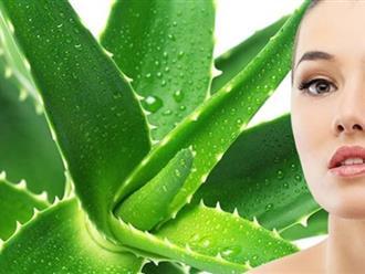 """Cách làm đẹp từ cây nha đam """"thuốc tiên"""" tái sinh làn da của bạn"""