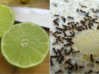 Lấy quả chanh làm thế này cả năm gia đình bạn sẽ không cần phải lo muỗi, kiến, gián