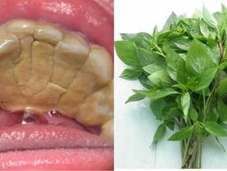 Cao răng bật ra từng mảng, răng trắng như bọc sứ chỉ nhờ nắm lá này