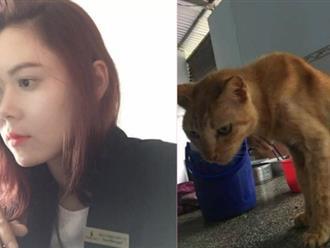 Câu chuyện về chú mèo 20 tuổi ở Long An khiến bao người cảm động