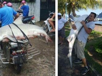 Thực hư chuyện cá mập xuất hiện ở vịnh Hạ Long