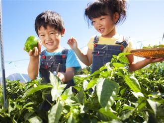 Hóa ra cha mẹ Nhật mang cả âm dương ngũ hành để dạy con. Thảo nào trẻ lại thông minh đến vậy