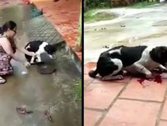 Bị lên án vì tàn nhẫn với thú cưng, người chủ lên tiếng: 'Tôi chặt chân để bảo vệ nó'