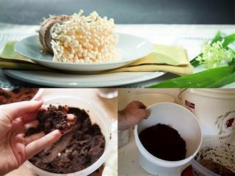Cách trồng nấm kim châm tại nhà đơn giản bằng bã cà phê: Thu hoạch chỉ sau 2 tuần