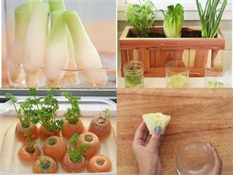 'Tái sinh' rau củ từ những phần bỏ đi bằng cách trồng đơn giản này, đảm bảo ăn cả năm không hết