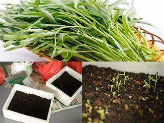 Cần gì mua ngoài chợ, chị em hãy học ngay cách trồng rau muống đơn giản tại nhà này