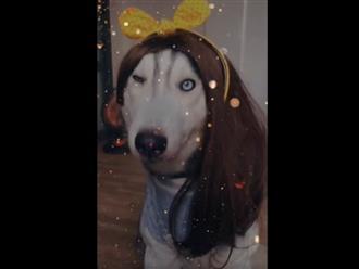 Chó ngáo được 'sen' cho đội tóc giả chụp ảnh, ai dè đôi mắt kỳ lạ còn gây chú ý hơn