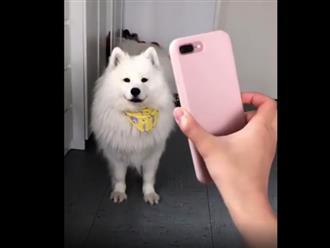 Chú chó có biệt tài tạo dáng 'sống ảo' theo hình ảnh hết sức đáng yêu