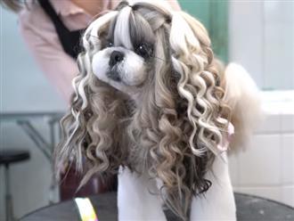 Chú chó sở hữu bộ lông dài như 'công chúa tóc mây' khiến dân mạng không thể rời mắt
