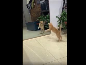 Không thể nhịn cười với chú mèo hoảng sợ khi thấy mình trong gương
