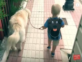 Clip bé trai dắt chú chó 'khổng lồ' đi đường siêu cưng