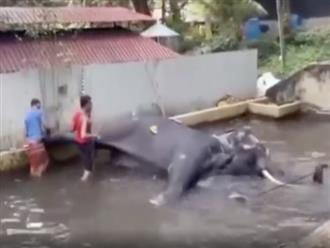 Clip chú voi đáng thương kêu khóc vì bị đánh đập dã man khiến dân mạng bức xúc
