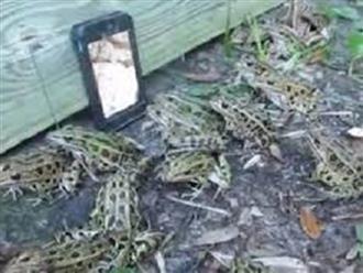 Học cách bắt được cả bao ếch chỉ bằng một chiếc điện thoại