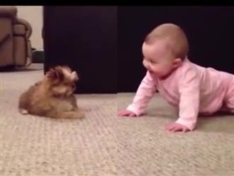 Clip hài hước em bé cãi nhau tay đôi với cún cưng