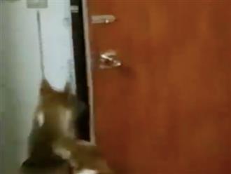 Kinh ngạc với màn trốn thoát đỉnh cao khỏi căn phòng đóng kín của 2 chú chó