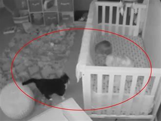 Lén đặt camera, cha mẹ ngỡ ngàng khi phát hiện con trò chuyện với mèo cả đêm