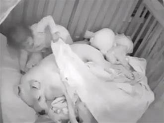 Tan chảy trước cảnh em bé thức giấc lúc nửa đêm đắp chăn cho em chó nằm cạnh