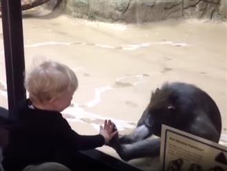 Yêu không chịu nổi cảnh các em bé lần đầu gặp khỉ, vượn