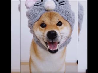 Chú chó đơ như cây cơ, giữ nguyên 1 biểu cảm khuôn mặt trong mọi hoàn cảnh khiến dân tình cười ngất