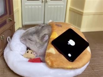 Chú chuột sướng nhất thế giới, không chỉ được xây nhà riêng mà còn xem tivi, uống nước ngọt như 'bà hoàng'