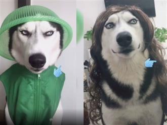 'Cười ngất' với biểu cảm chán đời của chú chó hết bị chủ bắt mặc toàn đồ xanh lá đến cho đội tóc giả