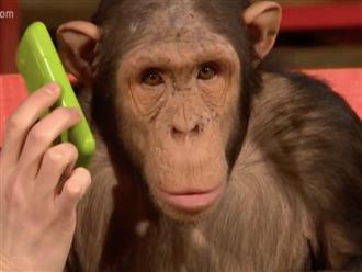 Dân tình khoái chí cảnh chú khỉ lần đầu được nghe điện thoại, biểu cảm bị lừa sau khi xem ảo thuật còn vi diệu hơn