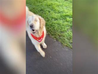 Thử để chú chó mù tự đi trên đường, chủ nhân bất ngờ vì loạt hành động gây choáng phía sau