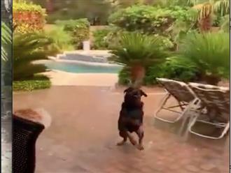 Được giao nhiệm vụ canh cô chủ, chú chó 'ngáo' khiến dân tình cười bò vì làm điều này dưới mưa