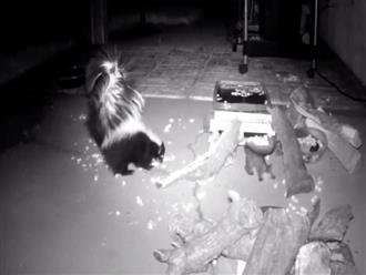 Lén đặt camera, chủ nhà ngỡ ngàng phát hiện những vị khách không mời ghé thăm lúc nửa đêm