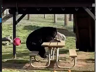 Thấy chú gấu to đùng ngồi trên ghế công viên, mọi người đến gần thì phát hiện hành động gây ngỡ ngàng
