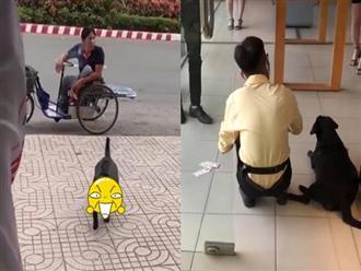 Cảm động hình ảnh chú chó theo ông chủ khuyết tật đi bán vé số