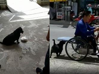 Cảm động chú chó Phú Quốc thay chủ tật nguyền xếp hàng nhận gạo