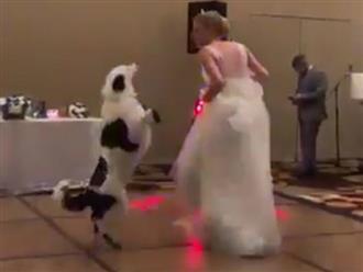 Chó cưng nhảy cùng cô chủ trong đám cưới cực đỉnh
