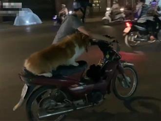 Dắt xe hết xăng đã khổ, nam thanh niên còn phải thồ thêm chú chó béo ú trên yên khiến ai nấy vừa thương vừa buồn cười