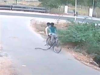 Hai thanh niên sợ hãi chạy 'tụt quần' vì rắn đòi 'đi nhờ' xe đạp
