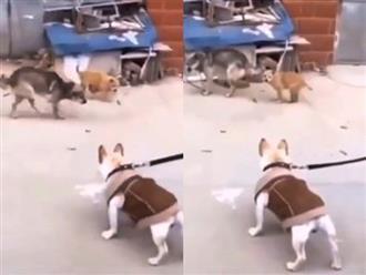 Thấy bạn bị xích, 2 chú chó cà khịa hài té ghế