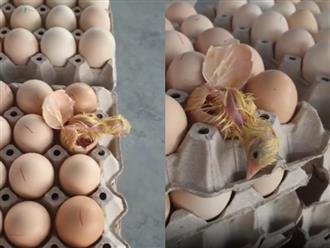 Thấy tiếng động lạ trên khay trứng, chủ cửa hàng kiểm tra thì phát hiện cảnh tượng không thể tin nổi