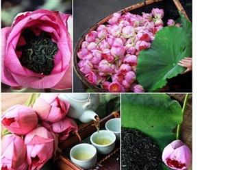 Khám phá công dụng của hoa sen vừa tốt cho sức khỏe vừa đẹp da