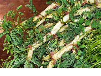 Điểm tên một số loại rau dại ăn được ở Việt Nam