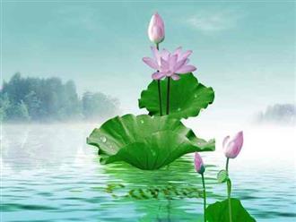 Nằm mơ thấy hoa sen có ý nghĩa gì?