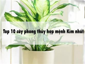 Top 10 cây phong thủy hợp mệnh Kim nhất
