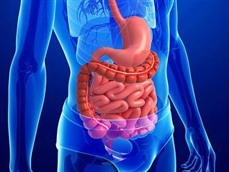 Bài thuốc dân gian chữa viêm đại tràng co thắt bằng thuốc nam hiệu quả như thế nào?