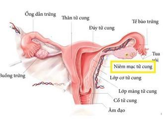 Niêm mạc tử cung dày nên ăn gì tốt cho quá trình thụ thai?
